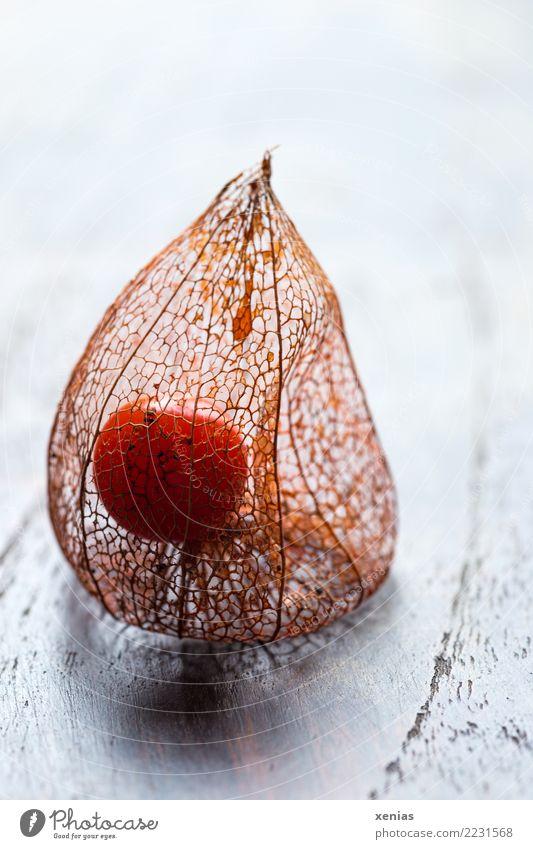 Beere der Lampionblume Pflanze weiß Herbst Holz braun orange leuchten Dekoration & Verzierung Vergänglichkeit Beeren Hülle filigran verschönern zierlich