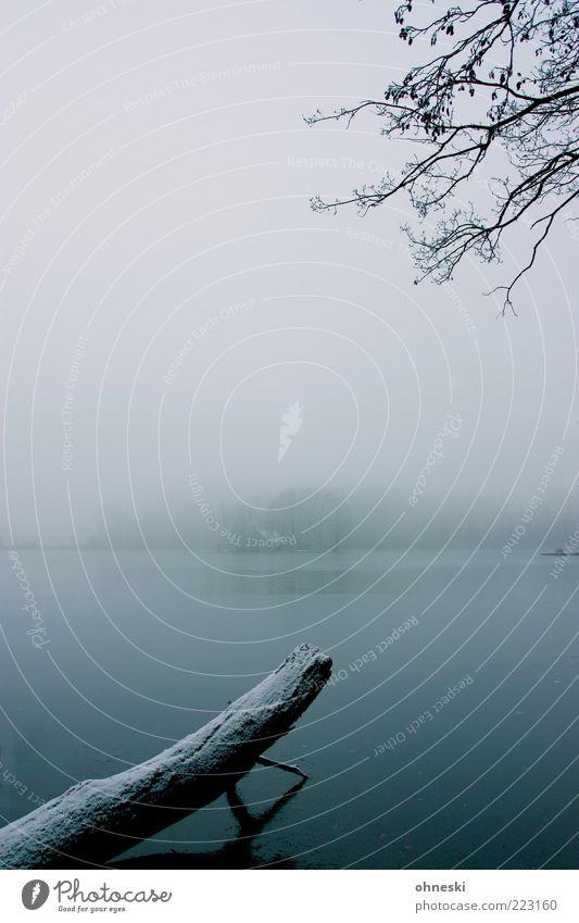 Stille Landschaft Wasser Winter Wetter schlechtes Wetter Nebel Eis Frost Baum Ast Moor Sumpf See Haus kalt Einsamkeit Gedeckte Farben Menschenleer