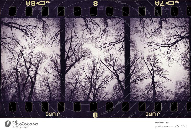3mal1 Schauder Lifestyle Kunst Kunstwerk Grafik u. Illustration Umwelt Natur Pflanze Tier Himmel Klima schlechtes Wetter Nebel Regen Eis Frost Baum Wald stehen