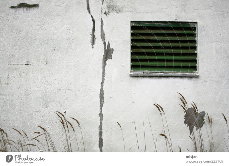 On summer days |Vanishing into the snow field Mauer Wand Fassade Fenster alt Idylle Natur Verfall Zeit Zerstörung grün weiß Putz Riss Grasspitze dreckig Furche