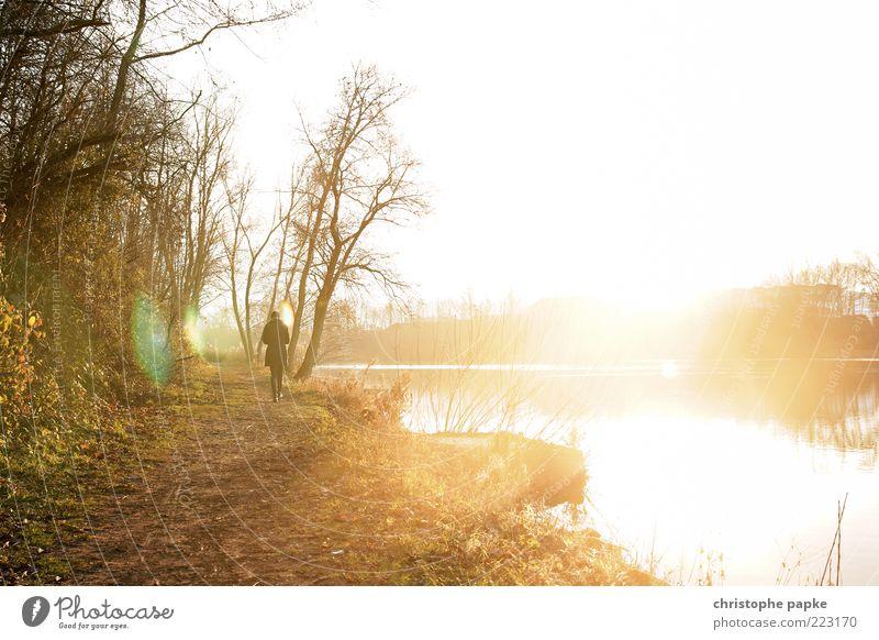 Lichtexplosion am See Mensch Natur Baum Sonne Erholung Herbst Landschaft Gras Wege & Pfade träumen hell gehen Freizeit & Hobby leuchten Spaziergang