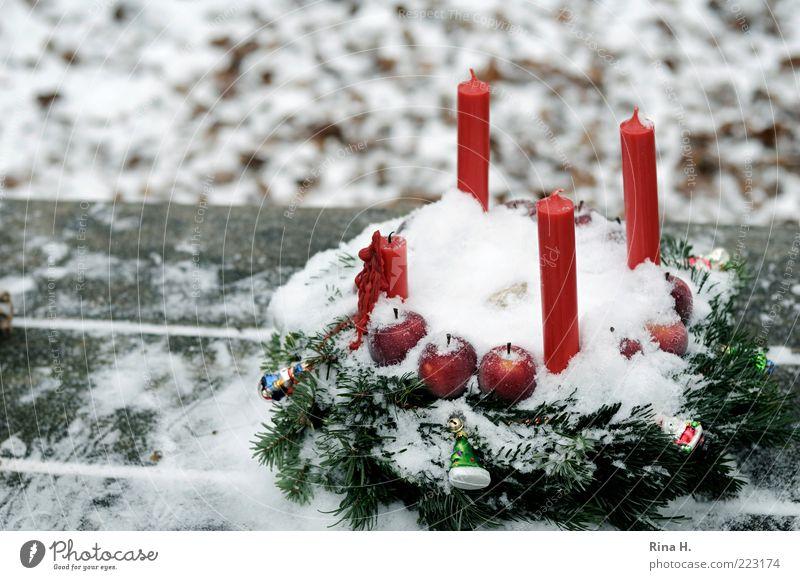 Advent im Wald... Feste & Feiern Natur Winter authentisch kalt grün rot weiß Gefühle Lebensfreude Vorfreude Glaube Erwartung einzigartig Religion & Glaube Kerze