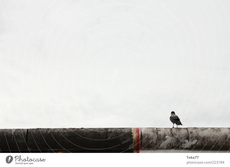 Berliner - Mauer - Vogel Kunst Hauptstadt Altstadt Menschenleer Wand Sehenswürdigkeit Wahrzeichen Denkmal Stein Beton Gefühle ruhig Sehnsucht Einsamkeit