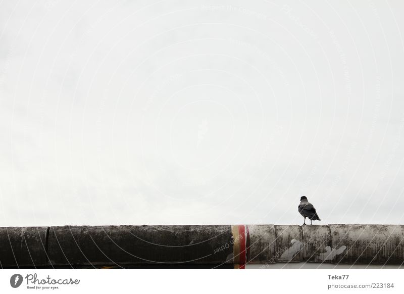 Berliner - Mauer - Vogel ruhig Einsamkeit Wand Gefühle Stein Kunst sitzen Beton Sehnsucht Denkmal Wahrzeichen Sehenswürdigkeit Hauptstadt