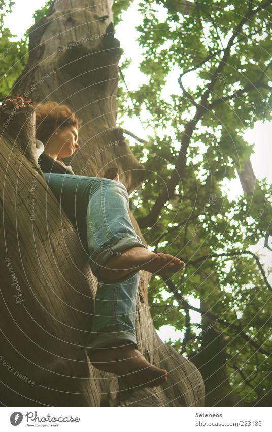 einfach mal hängen lassen Ausflug Freiheit Mensch Beine Fuß Umwelt Natur Sommer Herbst Klima Wetter Pflanze Baum Wald Jeanshose Holz beobachten berühren Denken