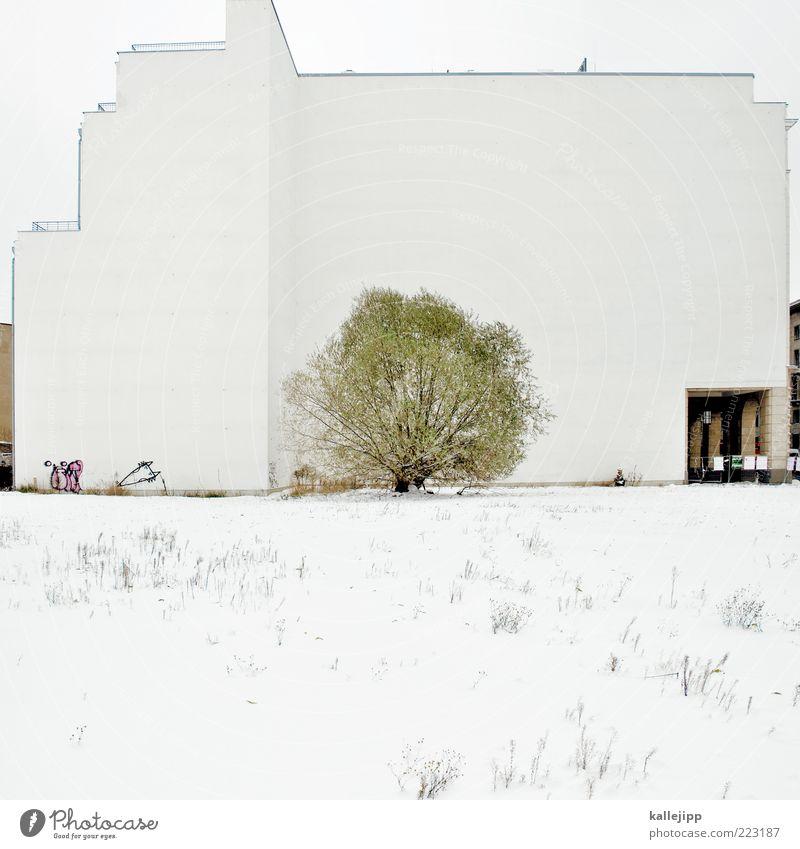 freigestellter baum weiß Baum Winter Wiese Schnee Architektur Gebäude Wetter Eis Fassade Platz Sträucher Frost Halm eckig