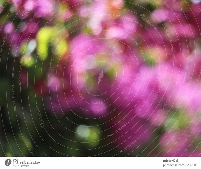 Urlaubsgewächs. ästhetisch Kitsch skurril Bougainvillea mediterran rosa rosarote Brille dezent schön Natur Blume Hecke Blühend Unschärfe grün Punkt mehrfarbig
