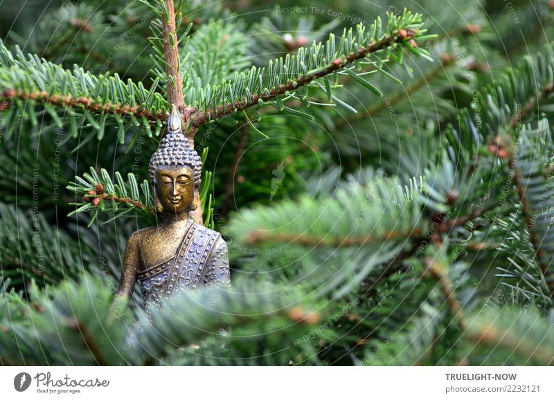 Buddha goes Weihnachtsbaum blau grün Erholung ruhig Wald Liebe Glück leuchten träumen gold sitzen Lächeln genießen einfach Sicherheit Glaube