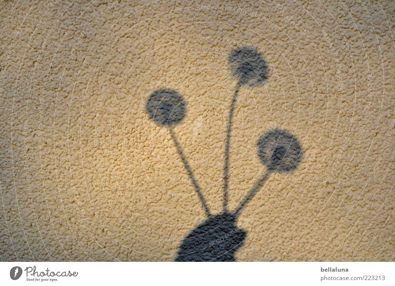 150 Schirmchenschatten - Nikolausmulti Hand schön Pflanze Sommer Blume Fassade festhalten Löwenzahn Putz Abend Wildpflanze