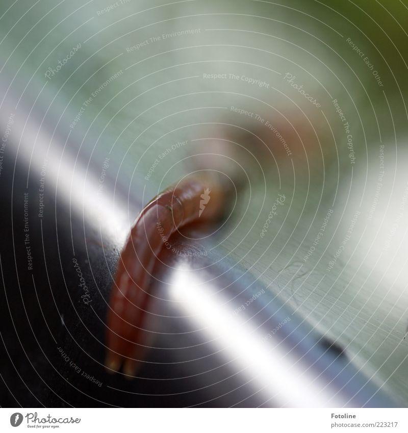 Wat? Wo ist der Nikolaus? Umwelt Natur Tier Wildtier Wurm natürlich Glätte schleimig Farbfoto Gedeckte Farben Außenaufnahme Nahaufnahme Textfreiraum rechts