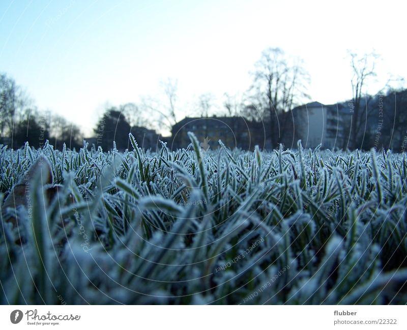 eines morgens Gras Wiese Tau Winter kalt gefroren nah Raureif Morgen blau Frost