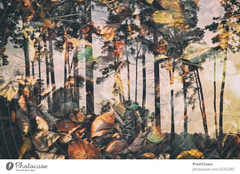 flammender Wald Natur Ferien & Urlaub & Reisen Pflanze schön Landschaft Baum Tier Tourismus Stimmung Ausflug Freizeit & Hobby wandern Blühend Nutzpflanze