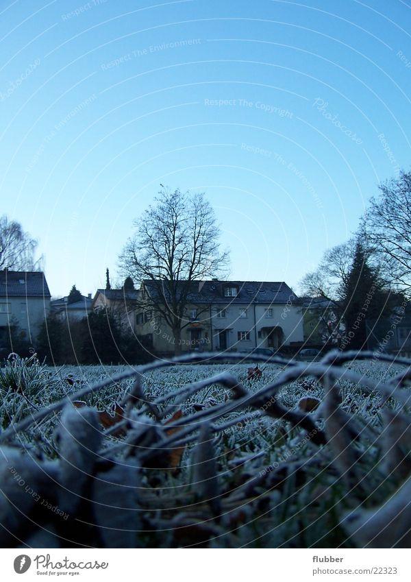 eines morgens II Gras Wiese Tau Winter kalt gefroren nah Raureif Morgen blau Frost