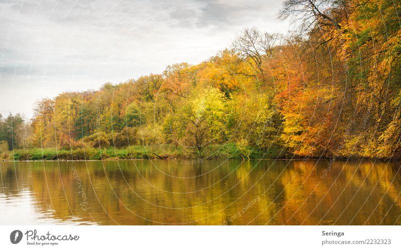 Goldener Herbst Himmel Natur Pflanze schön Wasser Landschaft Baum Tier Blatt Wolken ruhig Wald Umwelt See Stimmung