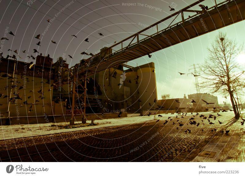 Hamburg Street View Pflanze Baum Stadt Hafenstadt Stadtrand Industrieanlage Fabrik Brücke Bauwerk Gebäude Mauer Wand Tier Vogel Taube Tiergruppe Schwarm fliegen