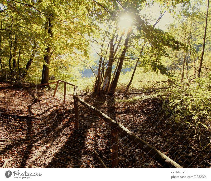 a bissle Herbstwärme Natur Baum ruhig gelb Wald Holz Landschaft Wege & Pfade Umwelt braun gold Fußweg Geländer Spazierweg Buchenwald
