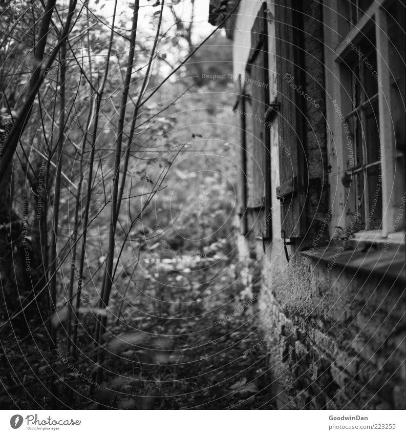 der Gärtner kam nicht. Natur alt Haus Einsamkeit kalt Wand Gefühle Traurigkeit Mauer Stimmung dreckig Umwelt Fassade trist Sträucher kaputt
