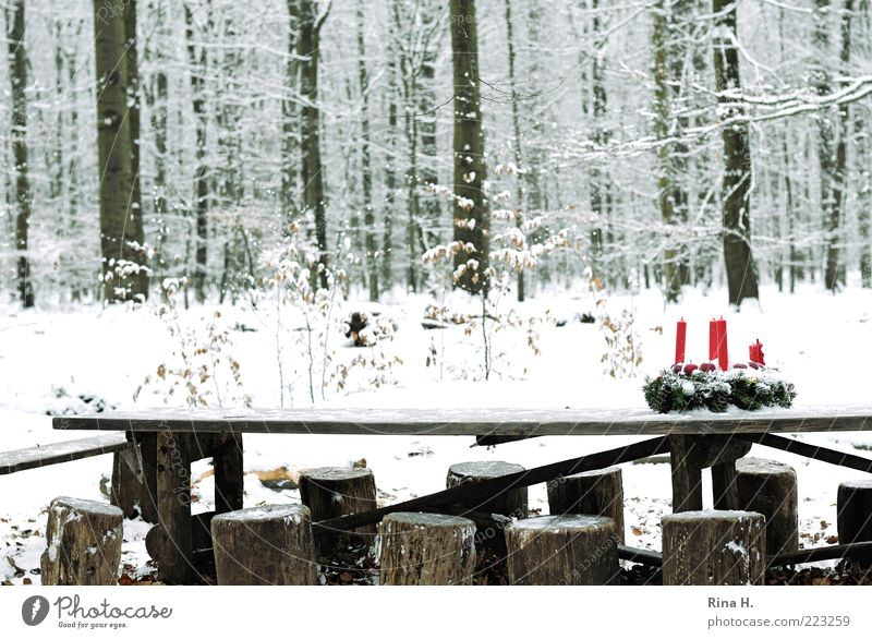 Advent bei den Sieben Zwergen Feste & Feiern Natur Landschaft Winter Baum Wald authentisch außergewöhnlich kalt bescheiden Schneefall Tisch Hocker Holz Farbfoto