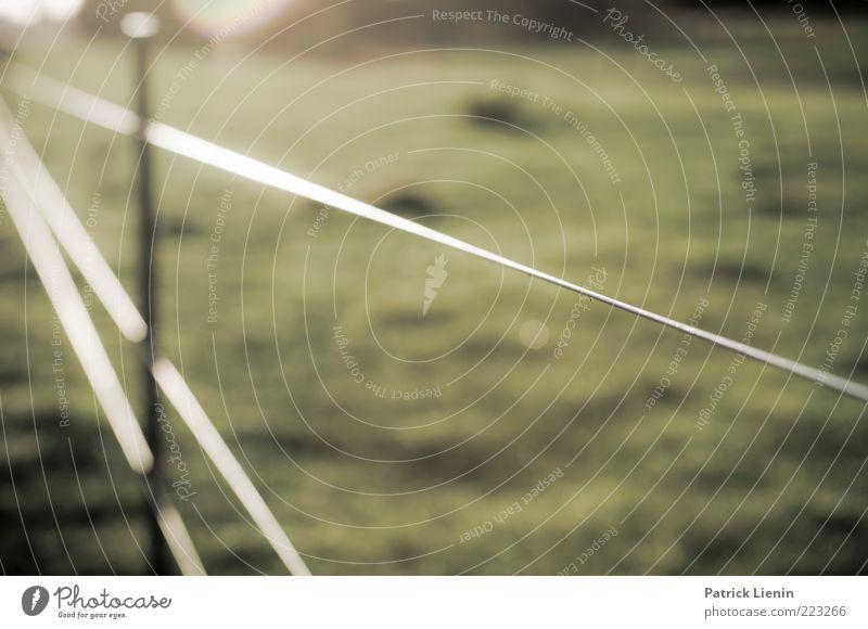 Abgezäunt grün Wiese Landschaft Umwelt hell glänzend Hintergrundbild dünn Zaun Weide Textfreiraum Pferch Grünfläche