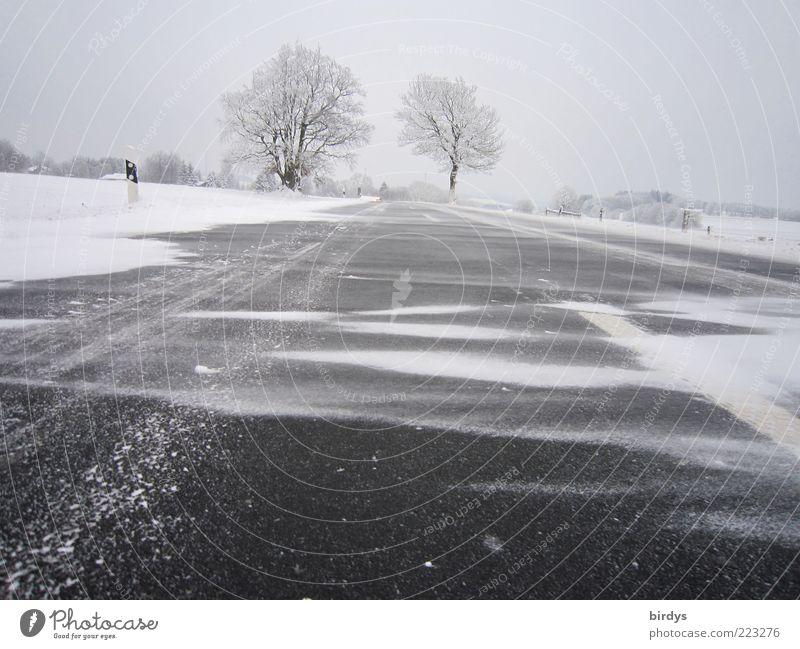 Schneetreiben Landschaft Ferne Winter kalt Straße Schnee außergewöhnlich Wetter Eis Wind Frost Asphalt Unwetter Sturm frieren Glätte