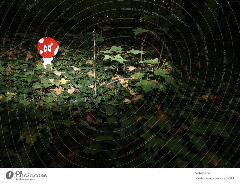 zum Fliegen gemacht Natur Pflanze Blatt Auge Wald dunkel Umwelt Landschaft entdecken skurril Idee Pilz falsch Efeu Waldboden