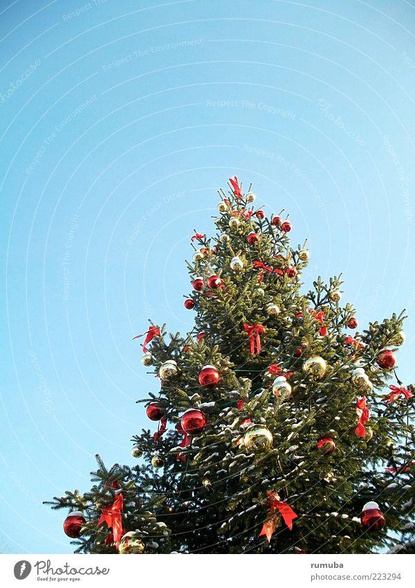 Oh Tannenbaum Natur blau Weihnachten & Advent grün Baum Dekoration & Verzierung Fröhlichkeit Glaube Wolkenloser Himmel Tradition Weihnachtsbaum Christbaumkugel