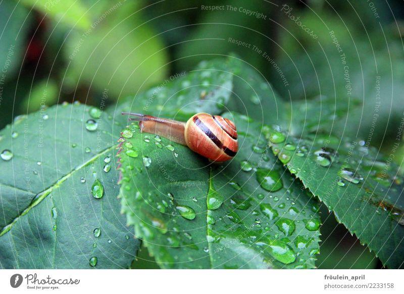 kleine Schnecke im Regen Natur grün Tier Blatt ruhig gelb Umwelt natürlich Bewegung braun frei Wassertropfen Gelassenheit nachhaltig