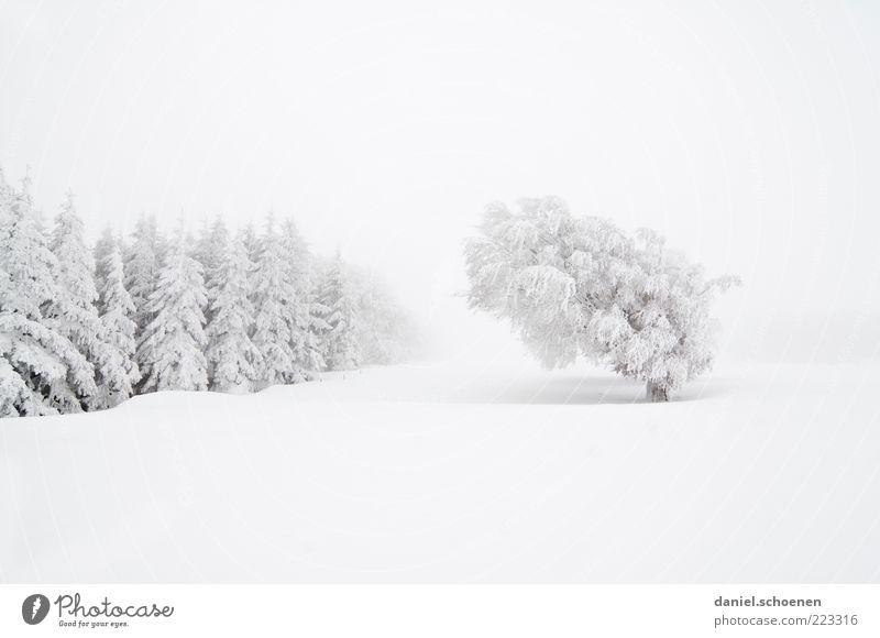 ... und jetzt ist leider alles weg !! Natur weiß Baum Ferien & Urlaub & Reisen Winter Wald Schnee Berge u. Gebirge Umwelt Landschaft hell Eis Wind Nebel Klima