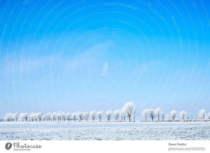 Baumlinie mit Raureif Natur Pflanze blau Landschaft Winter kalt gefroren Allee Ostfriesland Landkreis Friesland