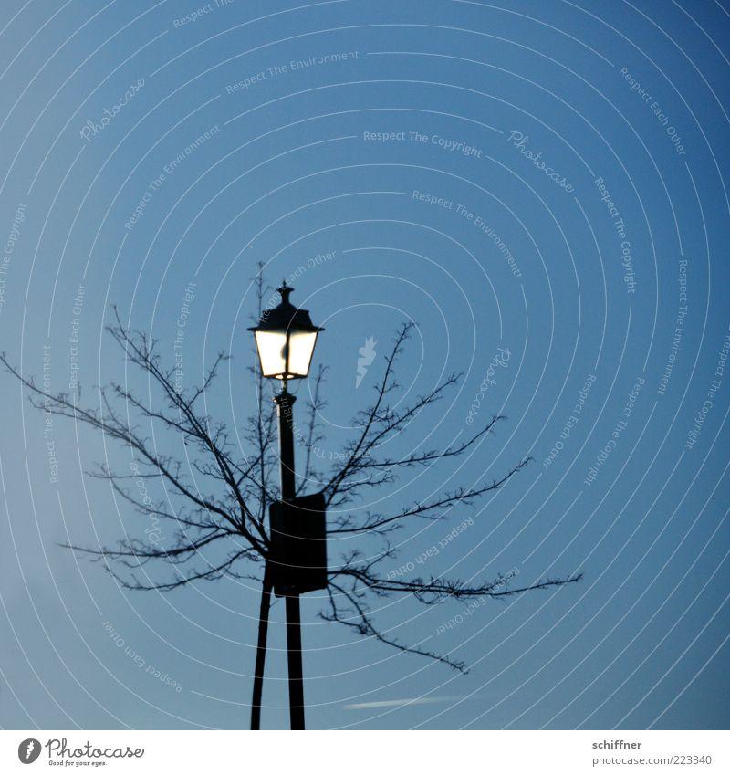 Solarlicht Baum Einsamkeit Schilder & Markierungen einfach Ast leuchten Straßenbeleuchtung Schönes Wetter laublos scheinend
