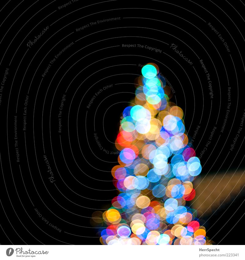 Allüberall auf den Tannenspitzen... Weihnachten & Advent Baum blau schwarz Stimmung Frieden Weihnachtsbaum Warmherzigkeit leuchten Vorfreude Nacht