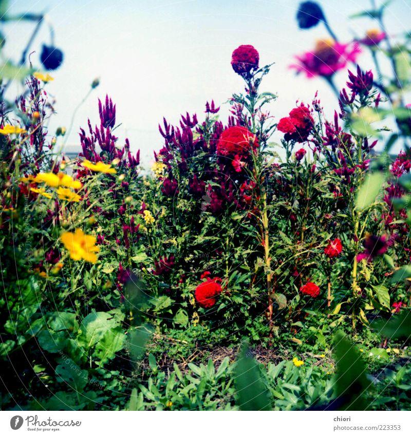 grün schön blau rot Sonne gelb Leben grau Frühling Kunst Wachstum violett Küssen Kunstwerk Natur Zärtlichkeiten