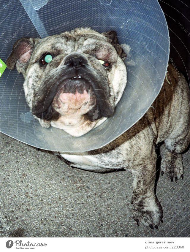 Gruseliger Hund. Tier Estland Straße Haustier 1 sitzen warten Armut dick Freundlichkeit Fröhlichkeit schön klug Stimmung Vertrauen Sicherheit Tierliebe Farbfoto