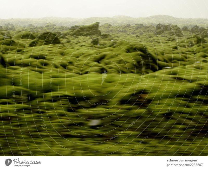 naturgeister Umwelt Natur Landschaft Pflanze Tier Erde Herbst Klima Gras Wiese Feld Gletscher Island außergewöhnlich grün Stimmung Erholung Umweltschutz moos