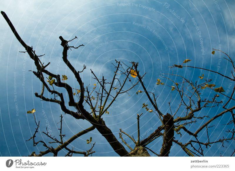Apfelbaum Umwelt Natur Pflanze Himmel Wolken Herbst Klimawandel schlechtes Wetter Unwetter Sturm Baum Sorge Oktober Ast Zweig Farbfoto Außenaufnahme