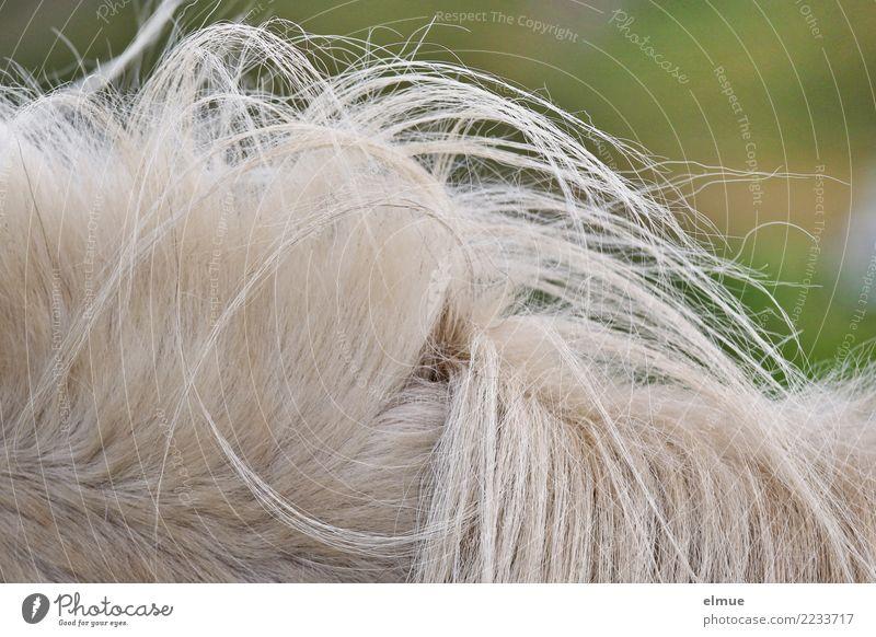 1 PS, verwuselt schön weiß natürlich Freiheit Haare & Frisuren Design wild elegant ästhetisch Kreativität authentisch Abenteuer einzigartig Romantik Sauberkeit