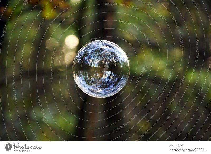 Spiegelwelten unter Spannung Umwelt Natur Pflanze Luft Schönes Wetter Baum Garten Wald frei glänzend groß hell nah natürlich braun grün weiß Seifenblase fliegen