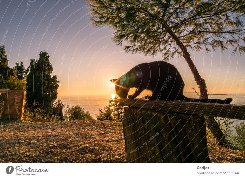 Katzenaussicht Ferien & Urlaub & Reisen Sommer Wasser Landschaft Baum Meer Tier ruhig Gras Tourismus Freiheit Zufriedenheit Horizont Erde sitzen