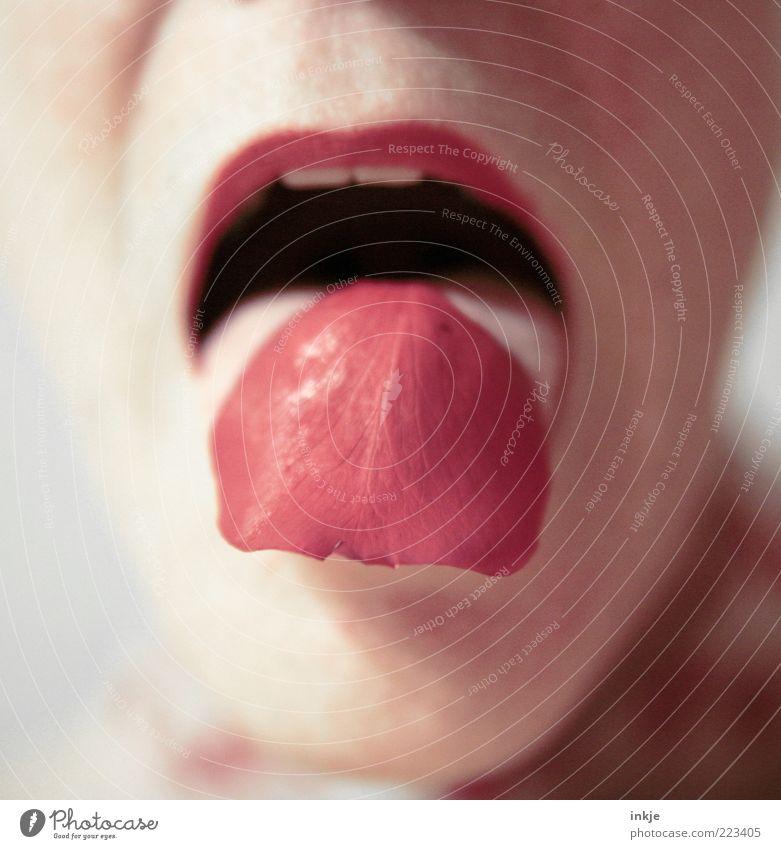refresh your senses! Frau rot Gesicht Erwachsene Leben feminin Gesundheit offen Haut Mund ästhetisch Rose Wellness Lippen rein Wohlgefühl