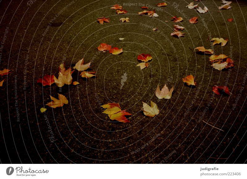 Das wars erst mal ... Natur Pflanze Blatt dunkel Herbst Umwelt Stimmung liegen mehrere natürlich Wandel & Veränderung Vergänglichkeit Asphalt Windstille