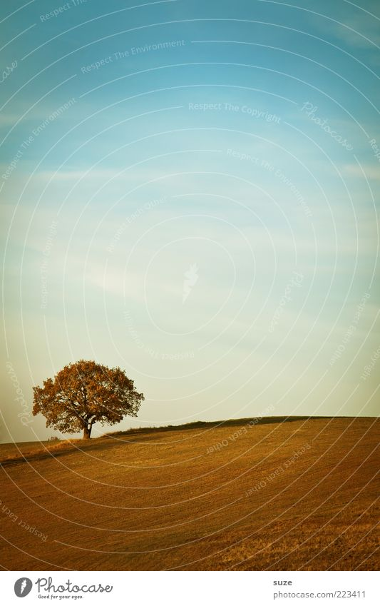Anfang Himmel Natur Pflanze Baum Einsamkeit Landschaft Umwelt Ferne Herbst Horizont Feld Erde Klima Schönes Wetter Urelemente einzeln