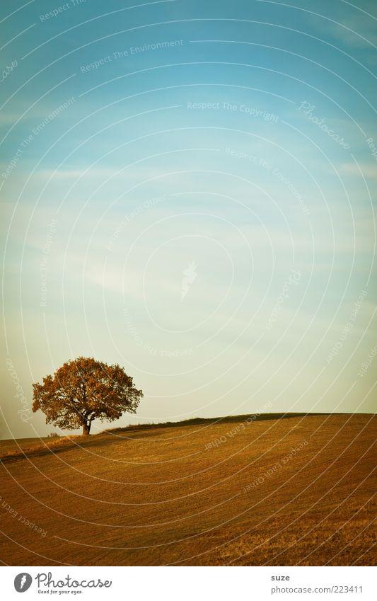Anfang Umwelt Natur Landschaft Urelemente Erde Himmel Horizont Herbst Klima Schönes Wetter Pflanze Baum Feld Einsamkeit einzeln Ferne Wolkenschleier