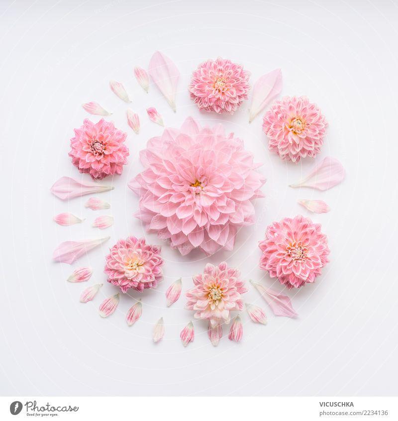 Runde blass rosa Blümen Komposition Natur Pflanze weiß Blume Blüte Liebe Hintergrundbild Stil Feste & Feiern Design Dekoration & Verzierung Geburtstag Zeichen