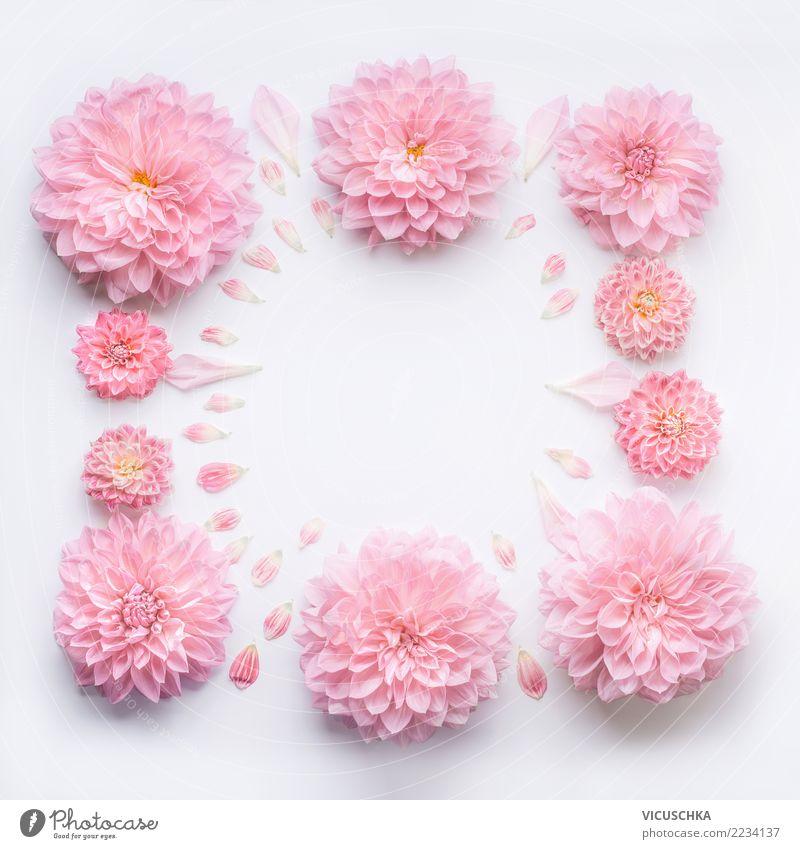 Rahmen aus blass rosa Blüten elegant Stil Design Wellness Spa Feste & Feiern Valentinstag Muttertag Hochzeit Geburtstag Natur Pflanze Blume Rose Blatt
