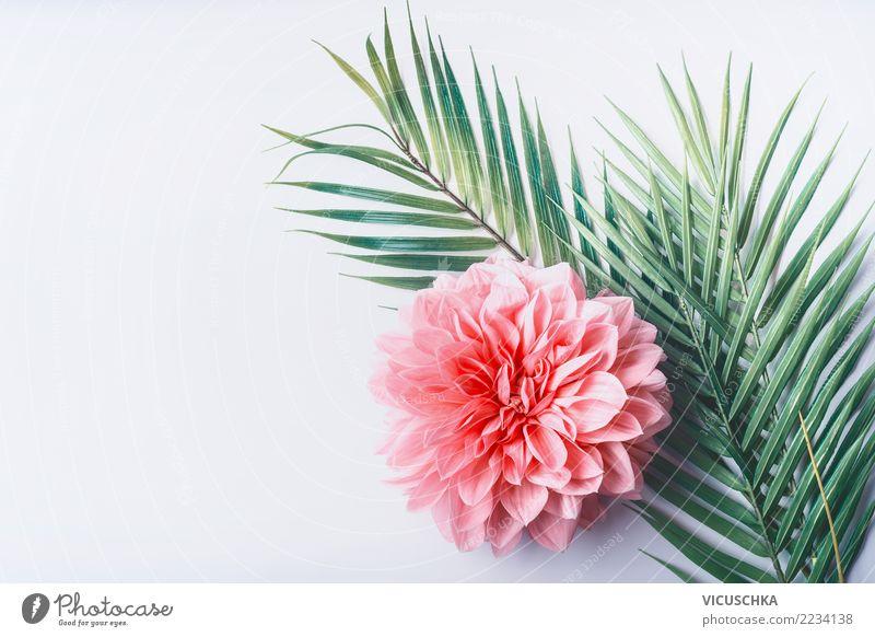 Tropishe Blätter mit rosa Blume Stil Design Schreibtisch Natur Pflanze Blatt Blüte Mode Dekoration & Verzierung Blumenstrauß Hintergrundbild Entwurf
