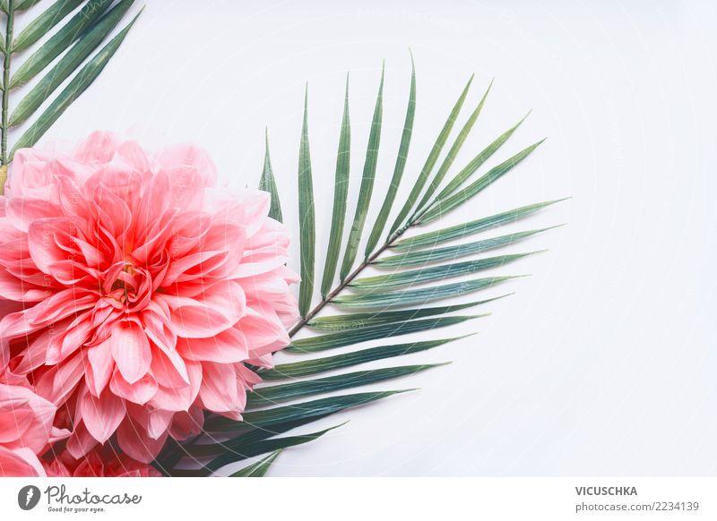 Rosa Blumen und tropische Blätter auf Weiß Stil Design Sommer Pflanze Blatt Blüte trendy rosa Entwurf Palmenwedel Rose Vor hellem Hintergrund Farbfoto