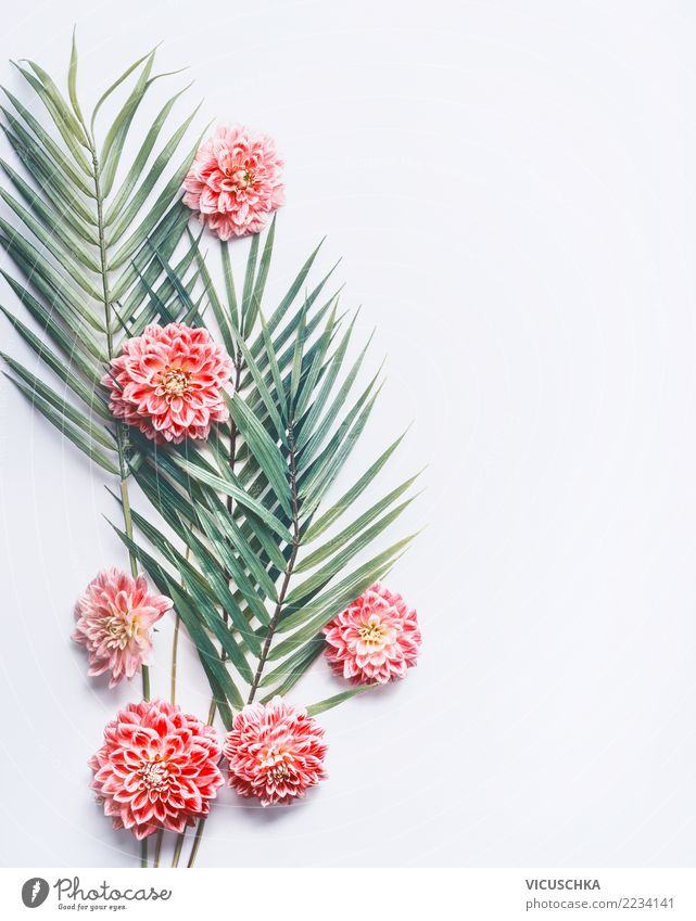 Tropische Palmblätter und rosa Blumen Stil Design exotisch Wellness Schreibtisch Natur Pflanze Blatt Blüte Mode Hintergrundbild Entwurf Palme tropisch weiß