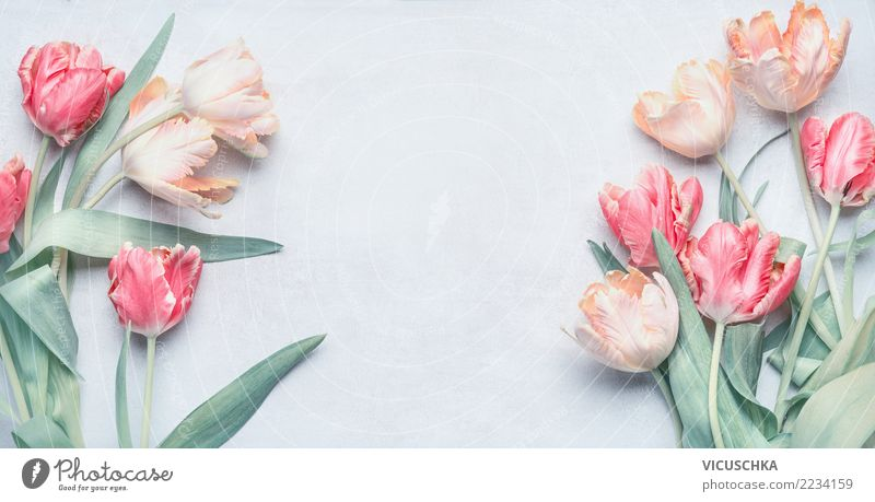 Tulpenbündel für Frühlingfeste, Pastellfarbe elegant Stil Design Veranstaltung Feste & Feiern Valentinstag Muttertag Hochzeit Geburtstag Natur Pflanze Blume