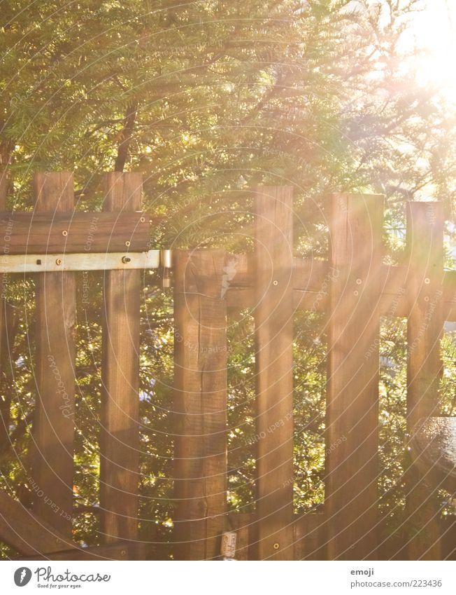 Strahlengang Sonnenlicht Herbst Baum Sträucher Garten leuchten Wärme Zaun Holz Grenze Begrenzung Farbfoto Außenaufnahme Morgen Licht Lichterscheinung