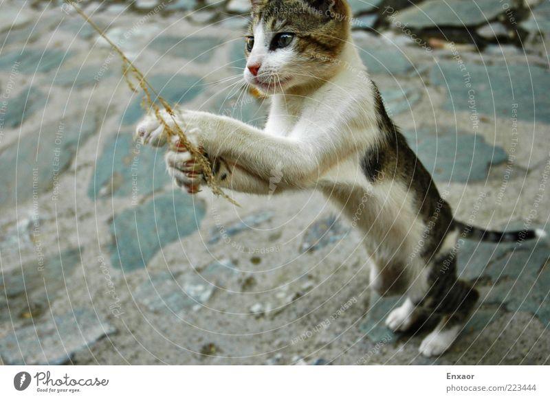 CatGame Tier Leben springen Bewegung Stein Katze Tierjunges Kraft wild Tiergesicht Neugier festhalten entdecken Jagd Lebensfreude Halm
